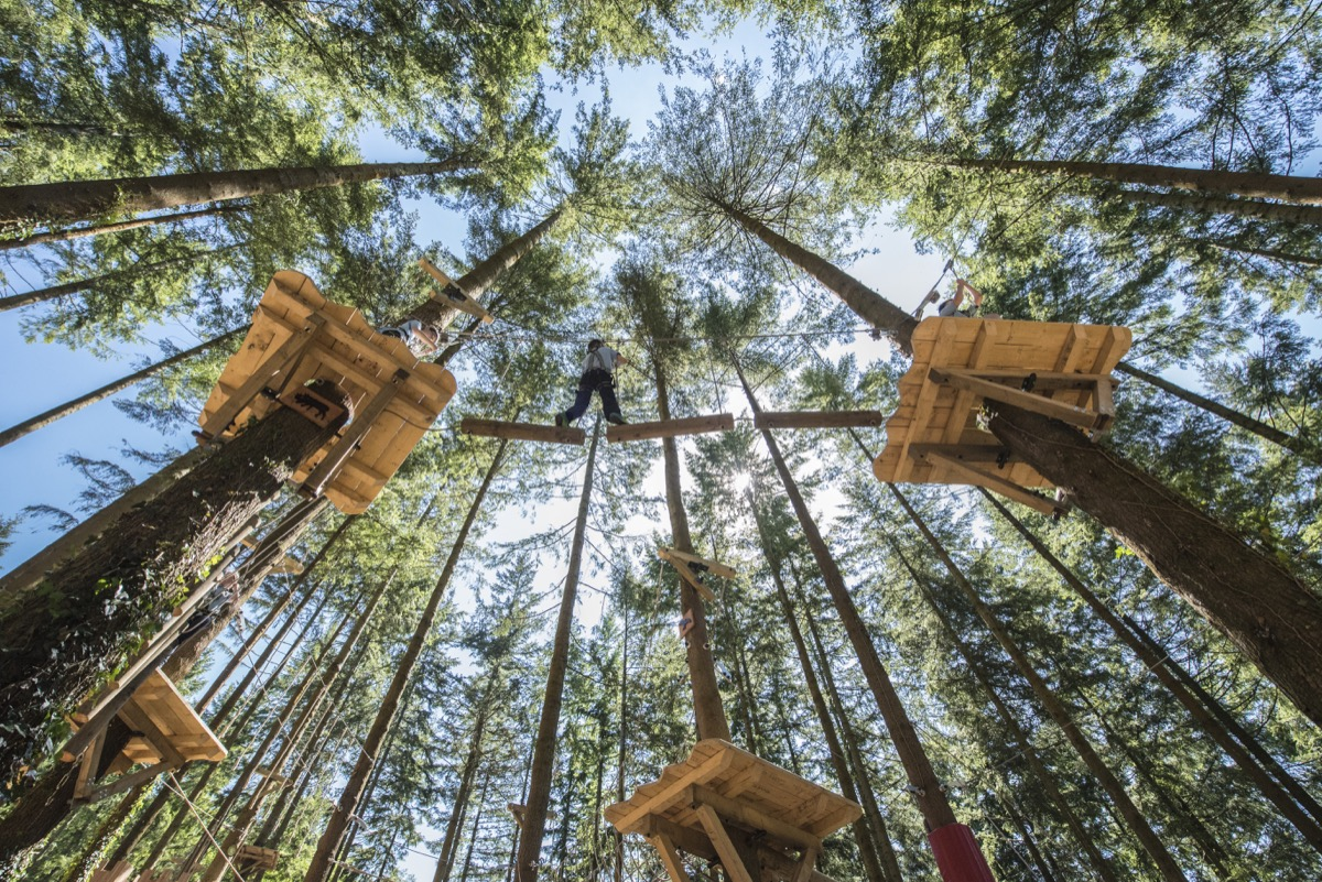 Looking for the ultimate adventure playground? Enter Treetop Nets®, the  newest adventure at Zip World Fforest, and experience a whole new view of  the world.