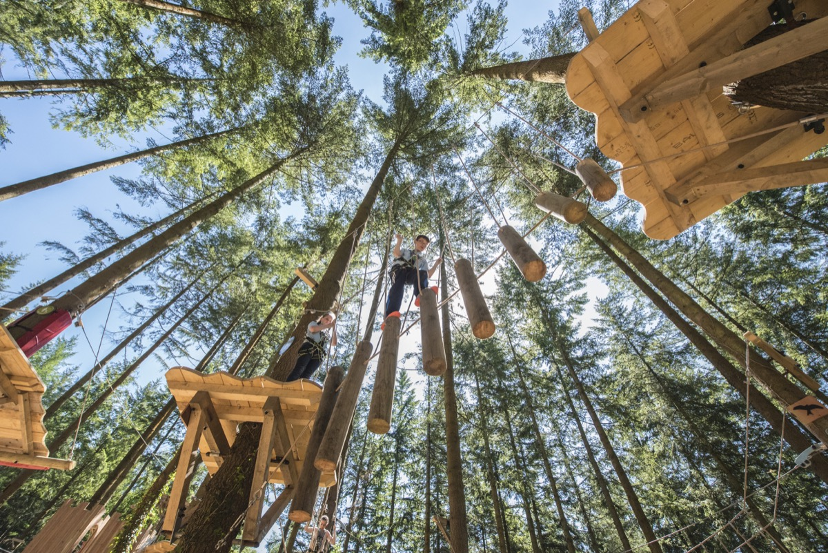 Zip World Treehoppers - An amazing zip line and adventure course for little  adventurers | Zip World